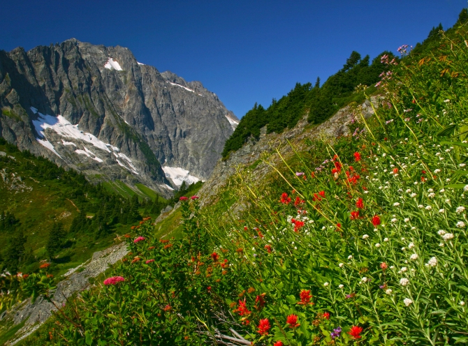 View from Sahale Arm Trail,  North Cascades National Park