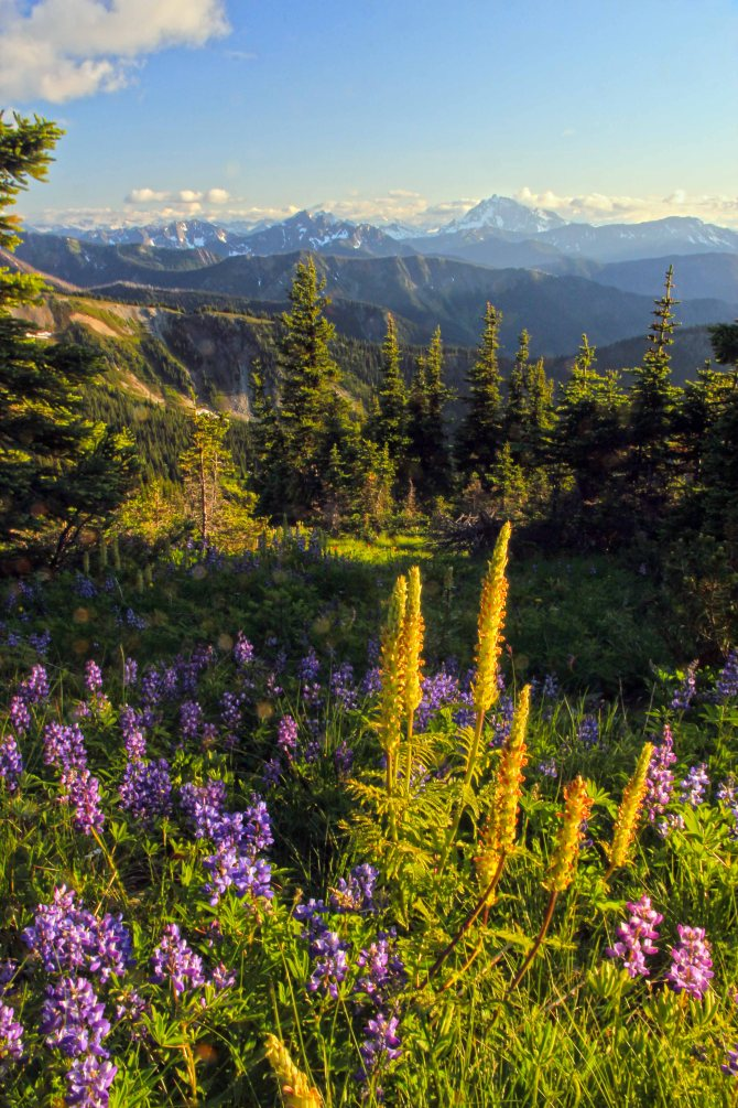Flowers on Lakeview Ridge