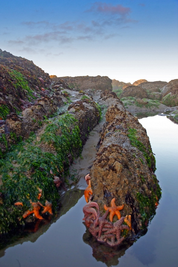 Starfish, Point of the Arches, Olympic National Park