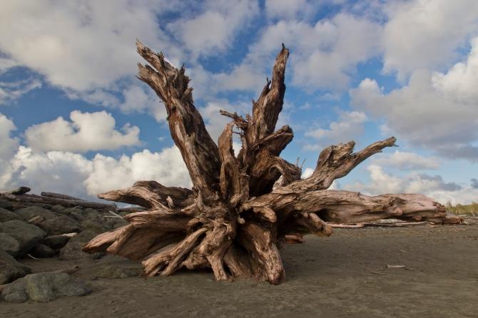 Driftwood Stump