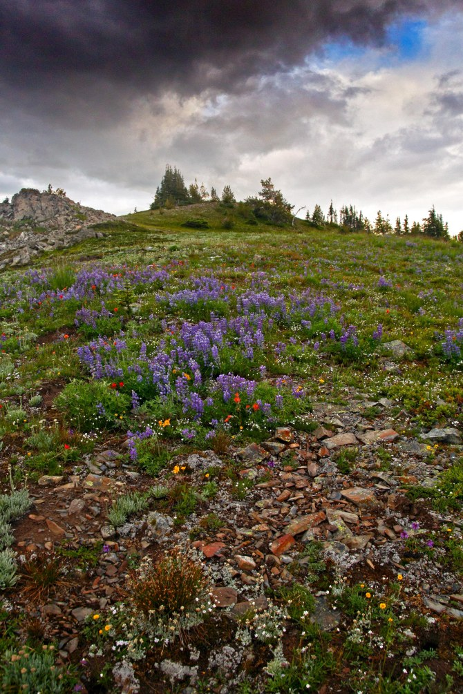 Pasayten Wilderness Wildflowers, near Devils Dome