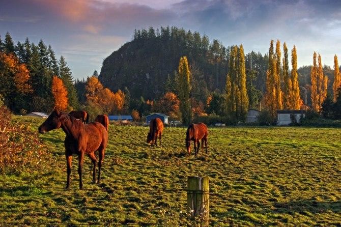 Horses at Big Rock