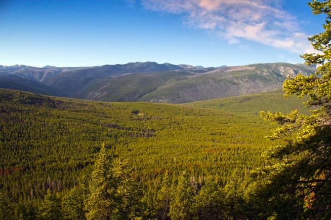 sea of trees pasayten wilderness