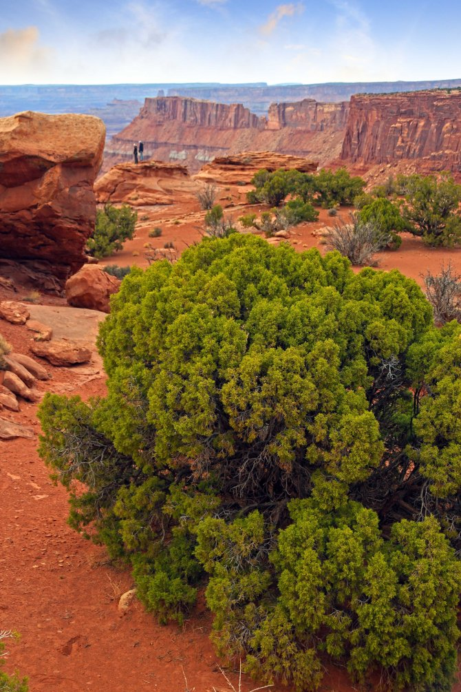 Canyonlands, on the plateau