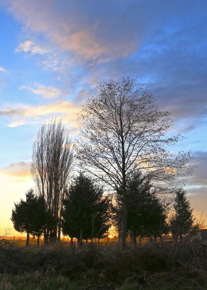trees 3em