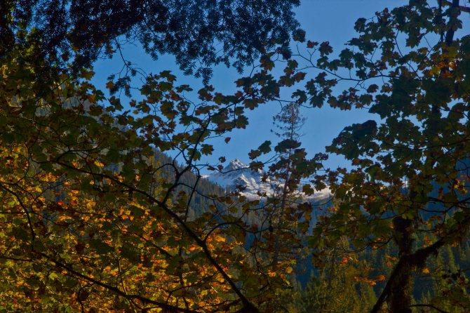 Trees 2 em