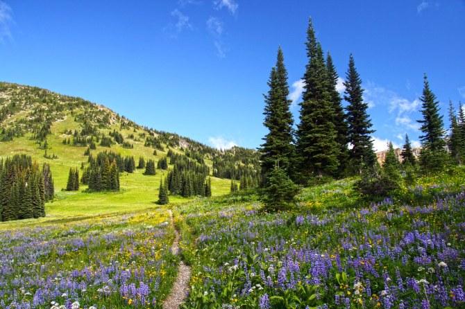 Pasayten Wilderness Wildflowers on the PCT em