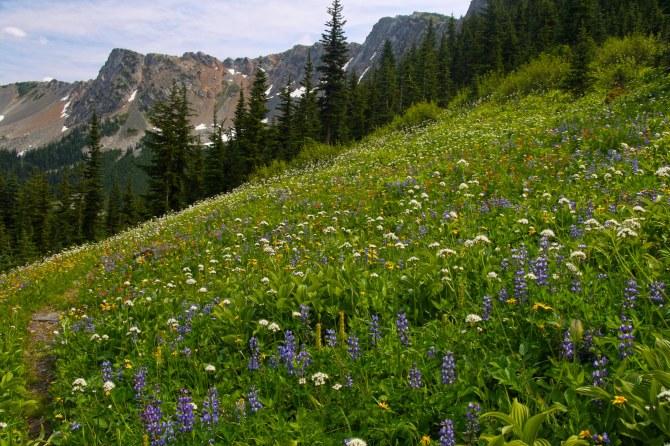 Wildflowers on the Jackita Ridge Trail, Pasayten Wilderness em
