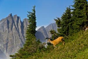 AndyPorter_deer_ wildlife