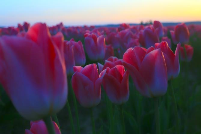 Pink sunset 4em