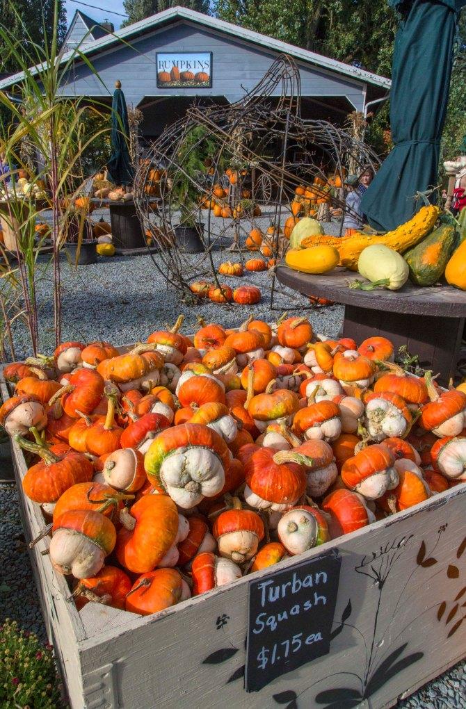 pumpkins 1em