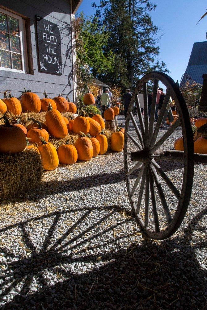 pumpkins 6em