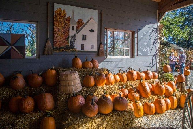 pumpkins 9em