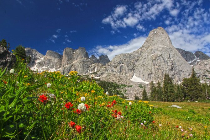 More wildflowers in the basin at Lonesome Lake, Cirque of the Towers, Wind River Range, Wyoming
