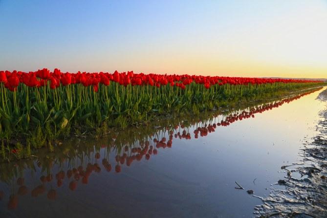 reds reflected em
