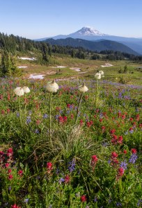 Snow Grass Flats and Mount Adams