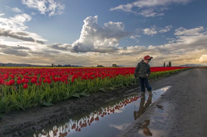 tulips 2014 5em