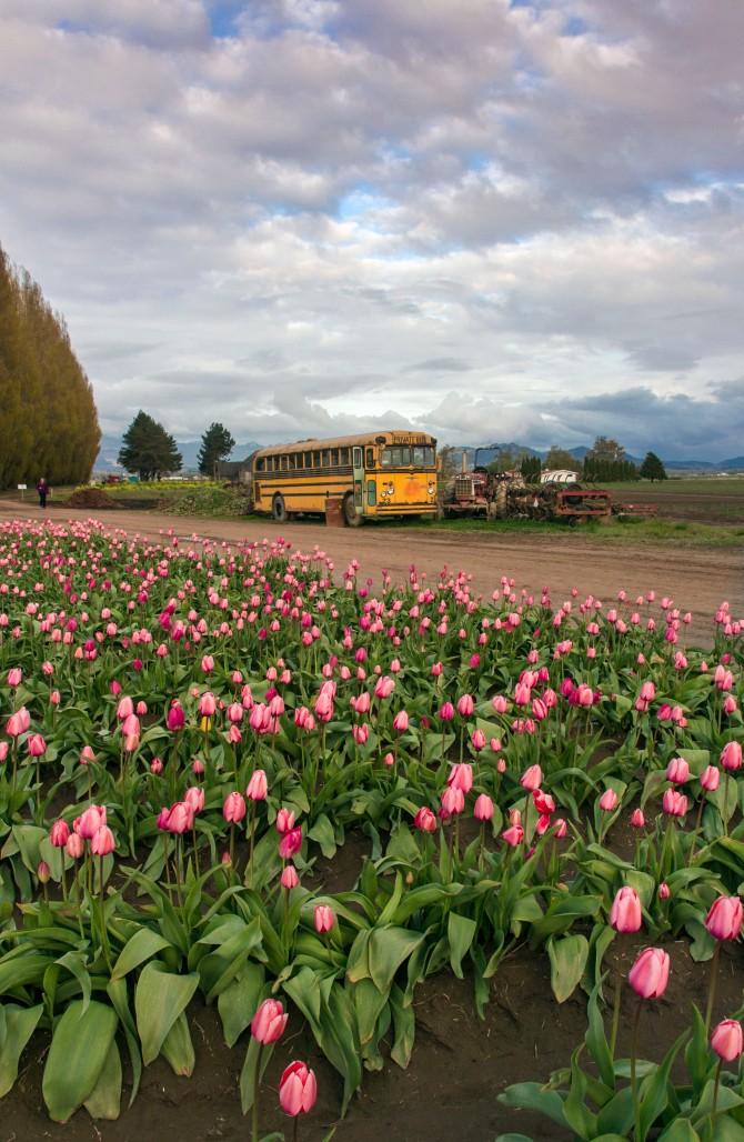 tulips 2014 em