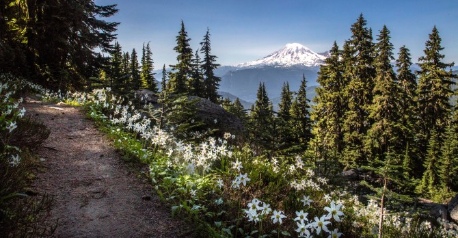 mount rainier sunset lillies em