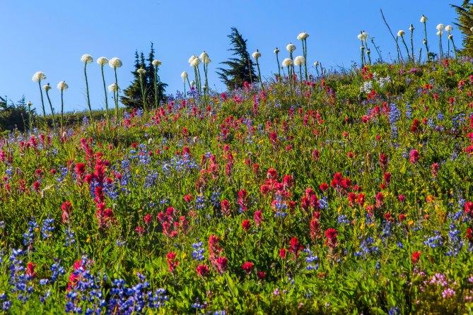 Wildflowers, Goat Rocks Wilderness em