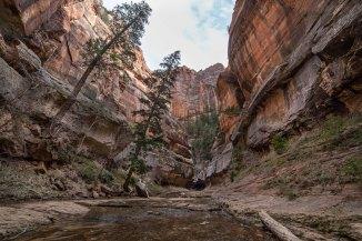 Left Fork Canyon, Zion National Park