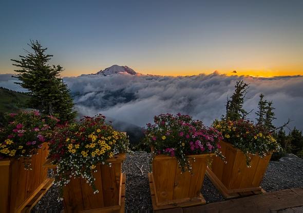 Mount Rainier and flowers