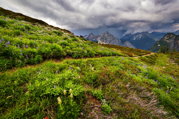 Meadows of Green and Storm Clouds