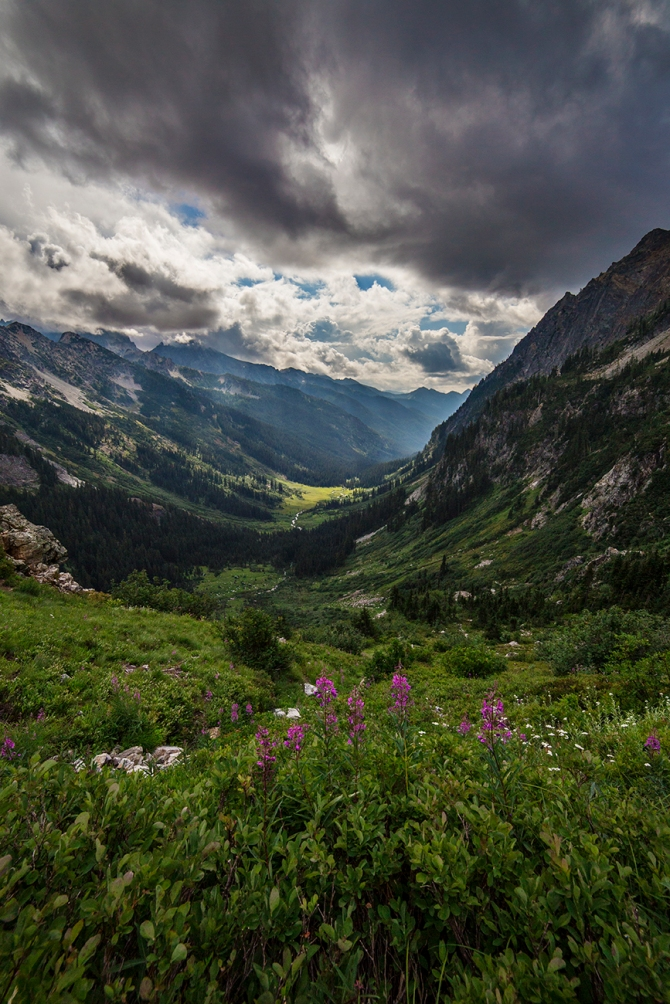 Spider Meadow from above