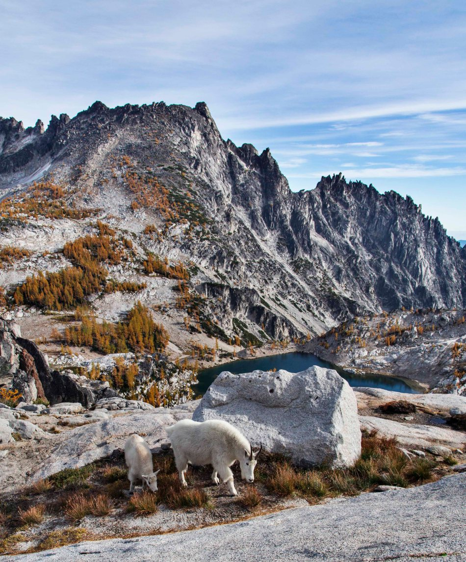 Enchantments and Mountain Goats