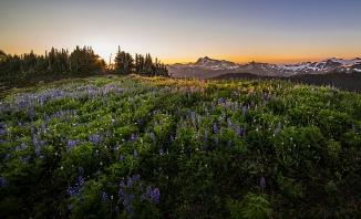 Mount Shuksan from Skyline Divide