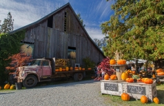 Gordon Skagit Farm