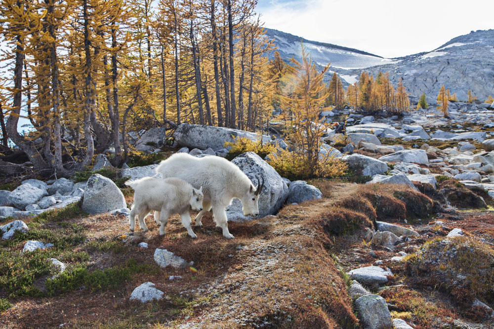 Little Annapurna, Enchantments, Alpine Lakes Wilderness, Washington бесплатно