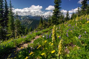 Wildflowers on Lakeview Ridge