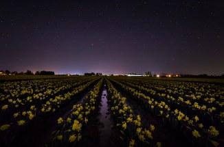 Skagit_Valley_Daffodil_Festival 2015_3