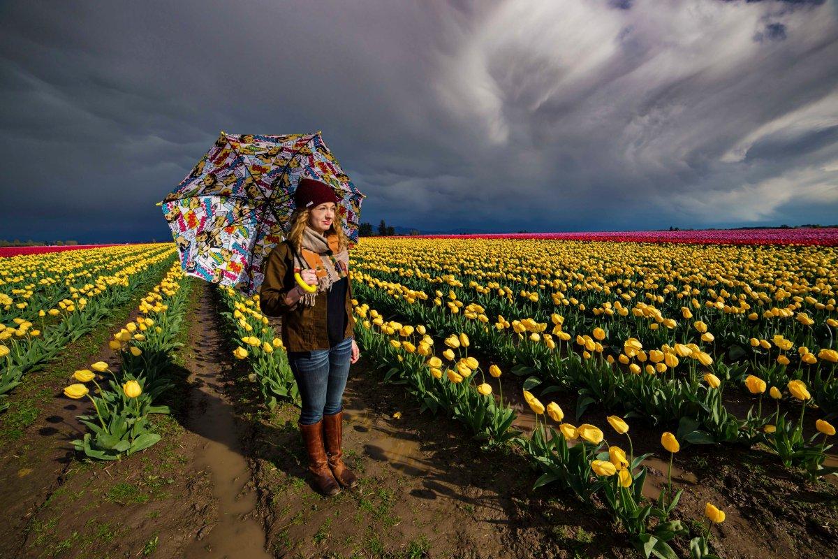 Umbrella Tulips 2