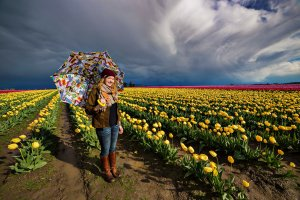 Yellow Tulips and a Smile