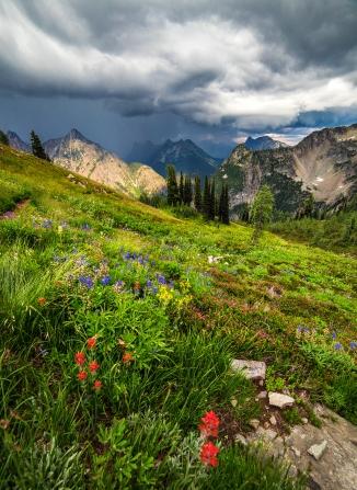 Wildflowers at Maple Pass