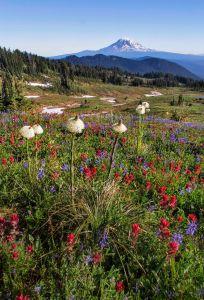Mount Adams and Snow Grass Flats 2015