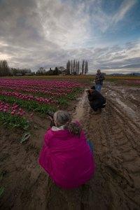 Skagit_Valley_Tulip_Festival 2015_18