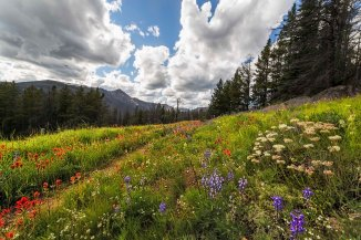 Paintbrush and Lupine, Pasayten Wilderness 2