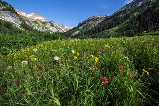Spider Meadows Wildflowers 1