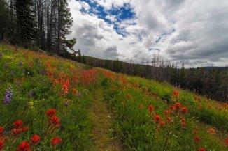 Trail to Sunny Pass, Pasayten Wilderness 2