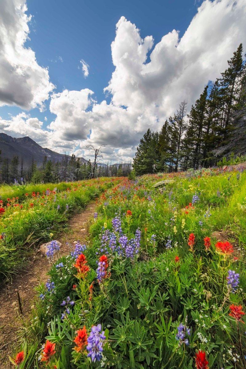 Trail to Sunny Pass, Pasayten Wilderness