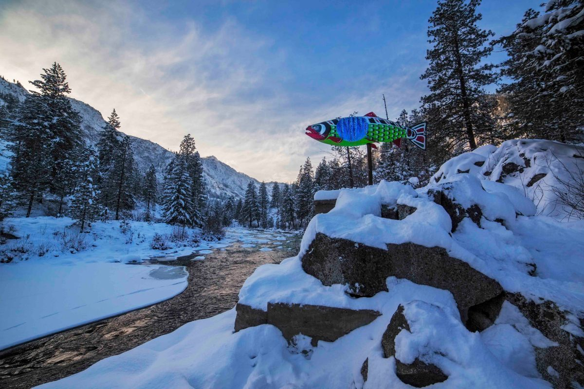 salmon-at-the-river
