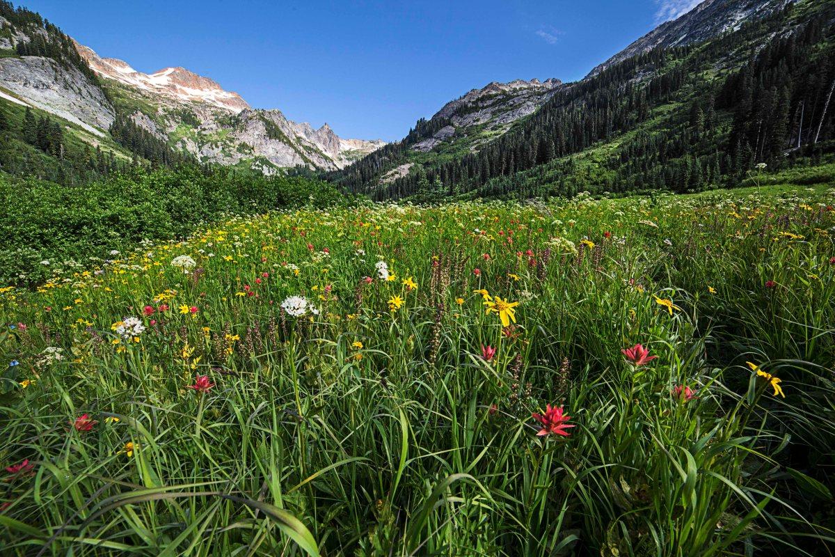 spider-meadows-wildflowers-1