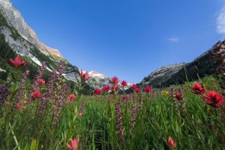 spider-meadows-wildflowers-2