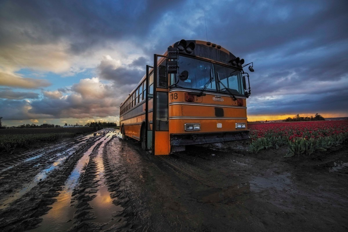 tulips-mud-and-bus