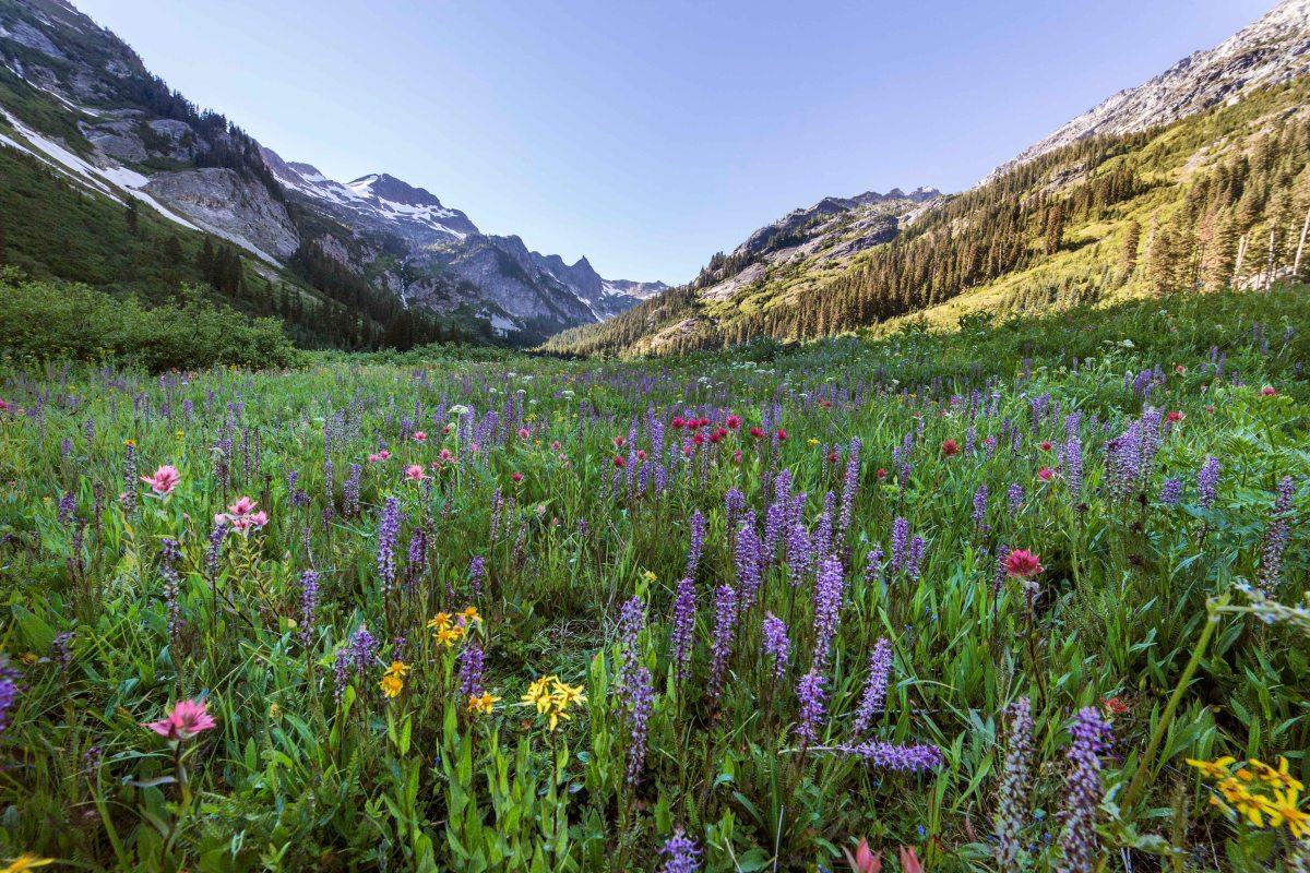 spider-meadows-wildflowers-4-2