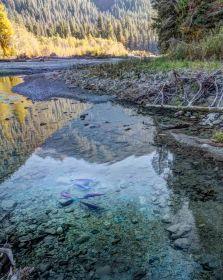 Baker River Salmon