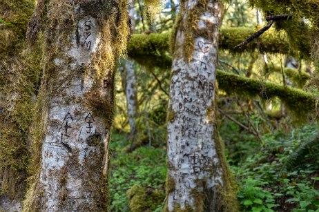 North-Frork-Sauk-Falls-Trail-trees